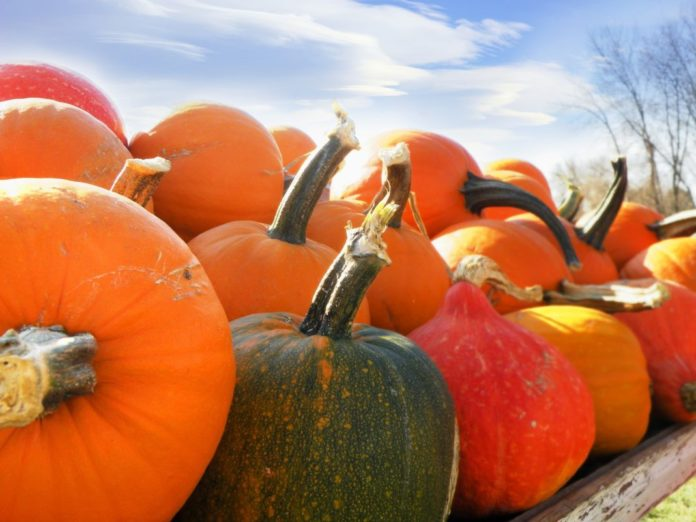 Green your Halloween with Gourds & Pumpkins!