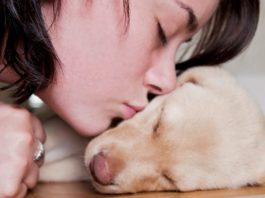 Welcoming a New Puppy Home - Family Life Tips Magazine
