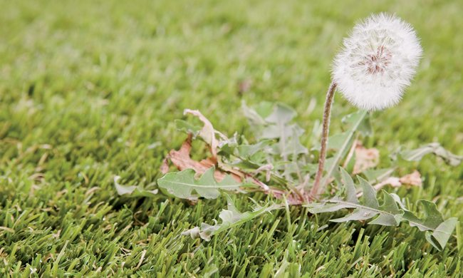 Weed prevention tips for lawn care novices