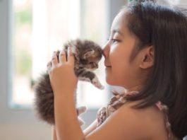 A Purr-fect Season to Adopt