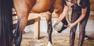 Horse Care & Safety During Summer