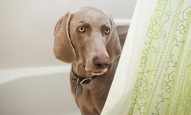 How to help manage your dog's noise aversion