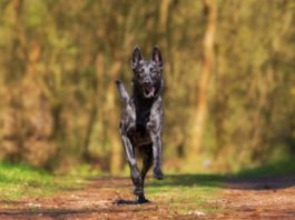 Good nutrition puts pets on track for better health