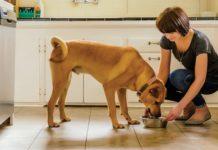 NUTRO. FEED CLEAN™ dry dog food recipes