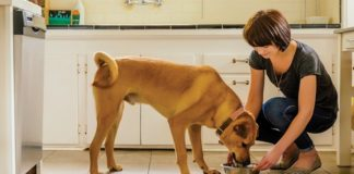 NUTRO. FEED CLEAN™ dry dog food recipes
