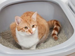 Some fresh ideas to streamline your cat clean-up routine