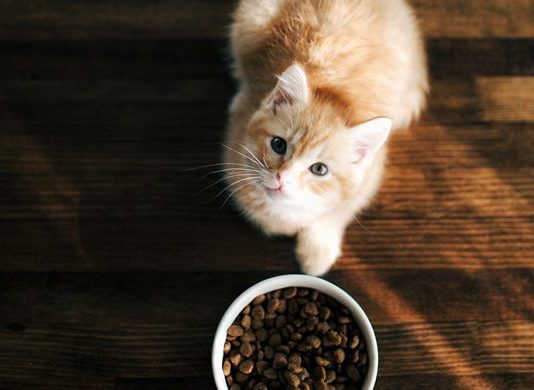 Cats are natural carnivores and need the proper amount of protein