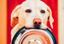 5 Benefits of Personalized Dog Food