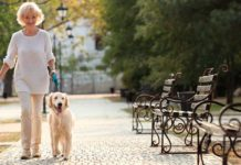 Pets serve as companions to senior citizens | Family Life Tips Magazine