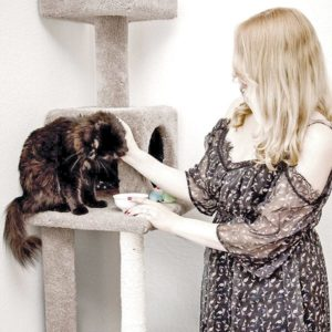 cats have energy they need to exert throughout the day. | Family Life Tips Magazine