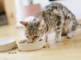 4 Tips to Help Keep Your Cat Purrfectly Happy & Healthy | Family Life Tips Magazine