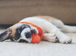 Top 5 Tips for New Pet Parents