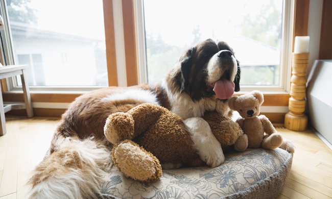 Help Your Dog Cope with Stress and Maintain Calm Behavior with these 6 Ways Tips | Family Life Tips Magazine