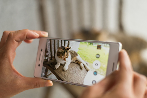 Owner Taking Photo of Cat with Cell Phone