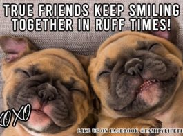 Dog Meme: True Friends Keep Smiling Together in Ruff Times | Family Life Tips