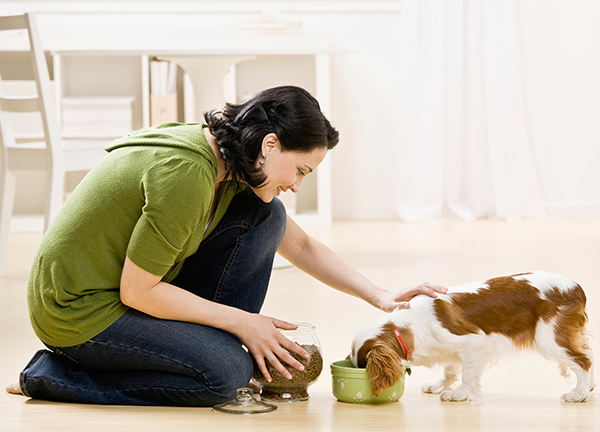 Check the Labels on your dogs pet food to ensure its safe Family Life Tips