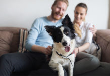Top 5 Ways to Help Keep Your Dog Happy and Healthy All Year Long | Family Life Tips