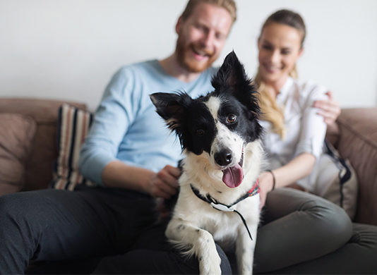 Top 5 Ways to Help Keep Your Dog Happy and Healthy All Year Long   Family Life Tips