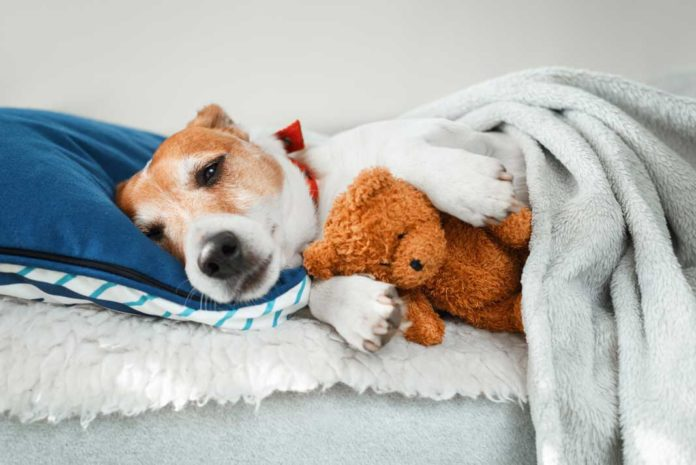 Dog peeing in bed at night while sleeping - Must Read
