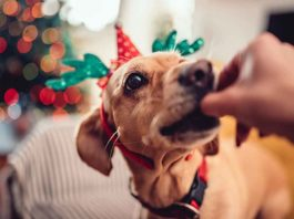 4 Ways to Include Your Furry Friends in Holiday Festivities | Family Life Tips Magazine