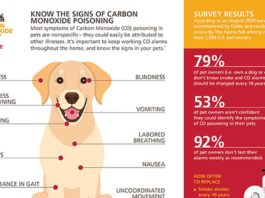 10 Signs of Carbon Monoxide Poisoning in Pets