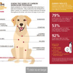 Signs Your Pet could have Carbon Monoxide Poisoning